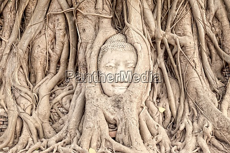 thailand ayutthaya buddha head in between