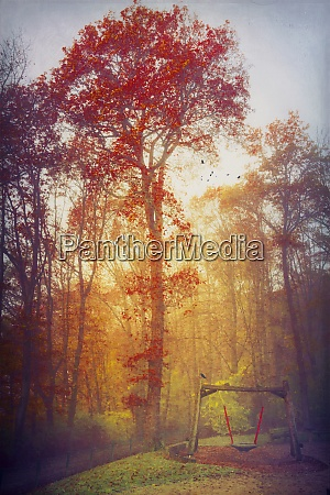 germany near wuppertal autumn forest and