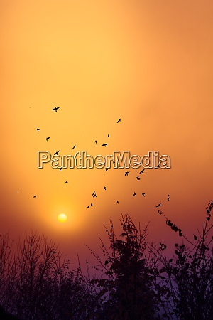 silhouettes of birds flying in front