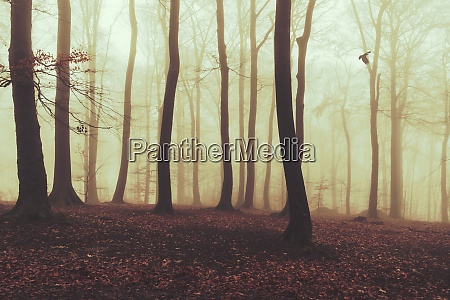 misty autumn forest at dawn