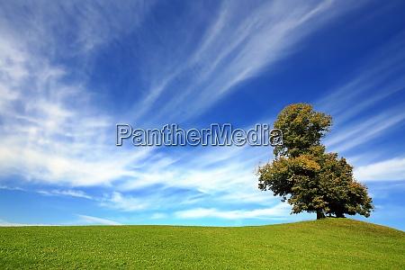 free standing tree