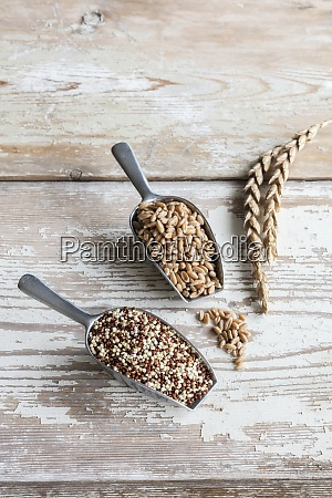 two serving scoops withgrunkernspeltandquinoa