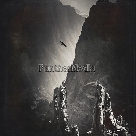 bird flying over caldera de taburiente