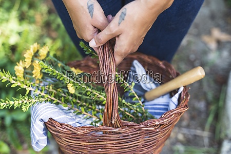 hands of woman holding basket while