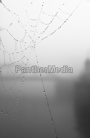 germany hamburg cobweb in fog