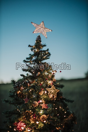 close up of christmas tree with