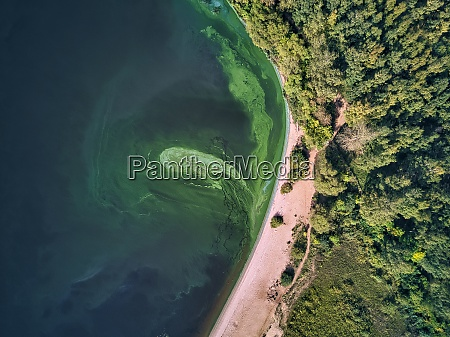 aerial view of green algae growing