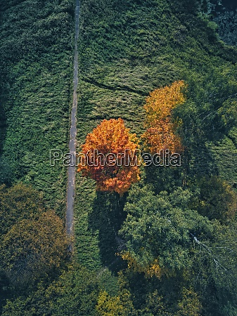 drone view of orange autumn tree