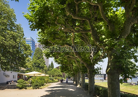 germany frankfurt promenade at river main