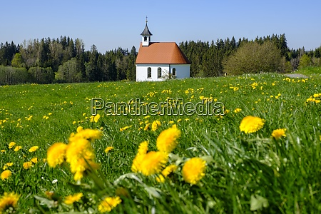 germany bavaria sulzberg springtime meadow in