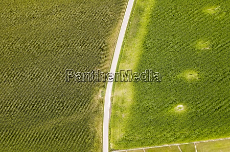 drone view of green countryside fields