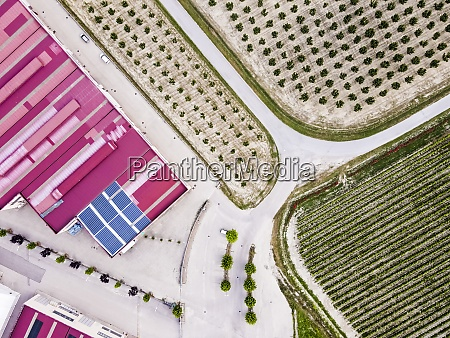 drone, view, of, green, plantation - 29121729