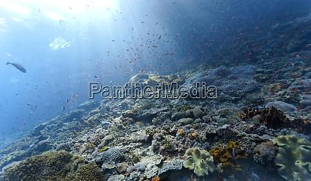 indonesia bali nusa lembongan coral reef
