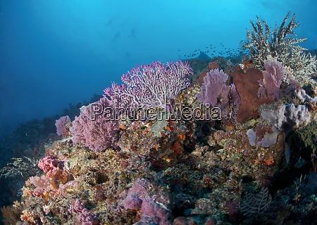 indonesia bali nusa lembongan reef with
