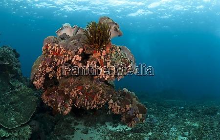 indonesia bali nusa lembongan tropical reef