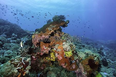 indonesia, , bali, , nusa, lembongan, , coral, reef - 29124246