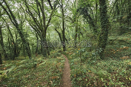 footpath amidst green plants and trees