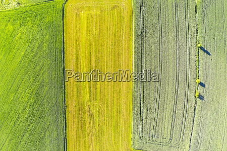 drone view of green and yellow