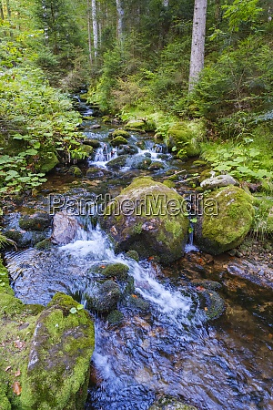sollerbach river flowing through bavarian forest