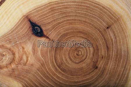 ash wood slab texture with annual