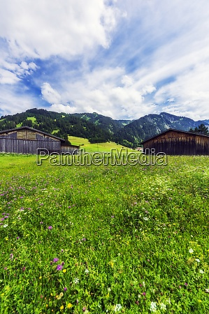 meadow in front of rustic barns