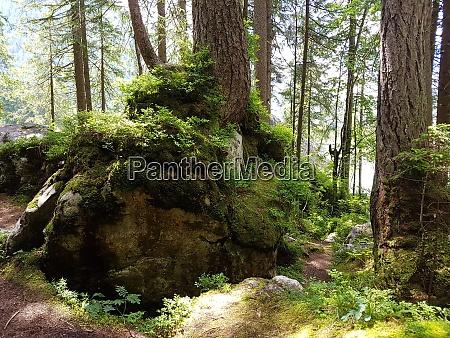 zauberwald hintersee ramsau geotop oberbayern
