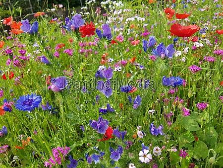 blumenwiese wiesenblumen wildblumen