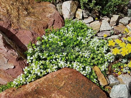 steingarten trockenmauer