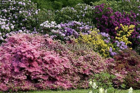 rhododendronpark mueritz