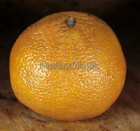 ugli citrus