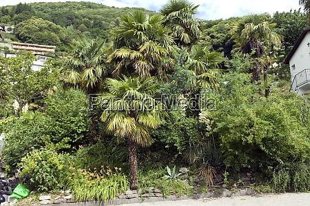 vegetation lago maggiore