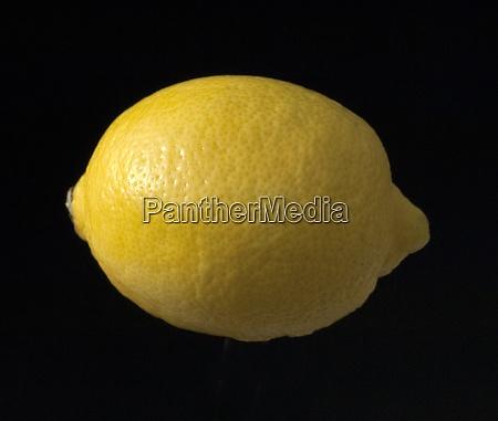 zitrone citrus limon
