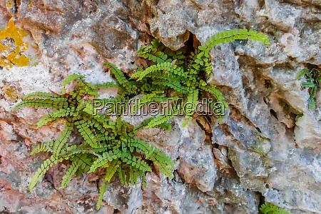 green plants between rocks in the