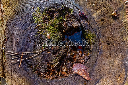 tree trunk with green moss leaves
