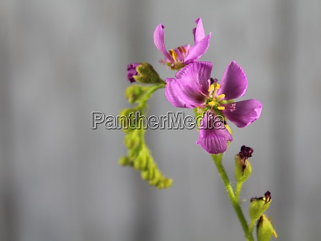 flower plant carnivorous small purple smell