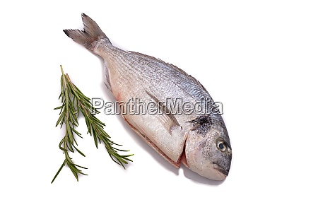 raw gilthead fish with rosemary from