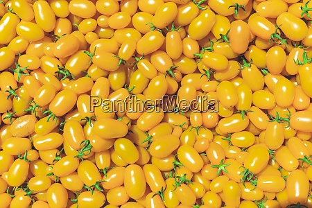 background from yellow ripe tomatoes grown