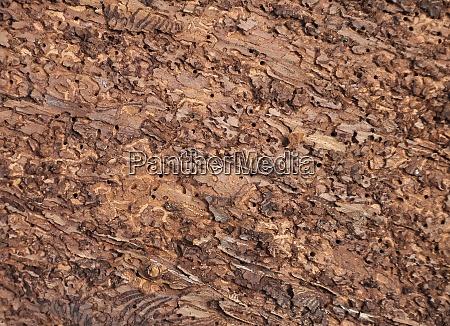 bark beetle feeding spots in spruce