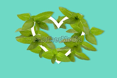 green leaves of mint shaped as