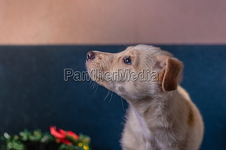 mongrel puppy with light brown fur