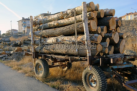 timber trade poplar wood for carpenters