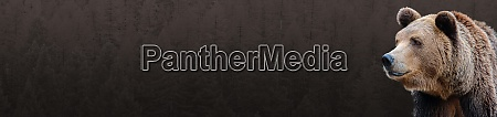 banner for the site brown bear