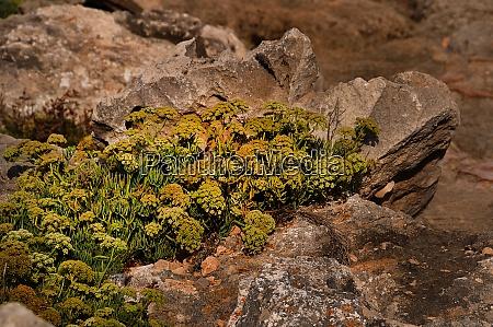 rocks on the coast of menorca