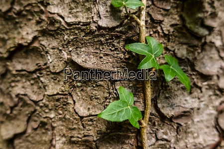 green plant grows up the bark