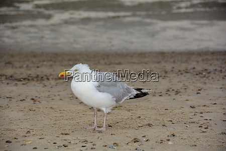 a gull stands on sandy beach