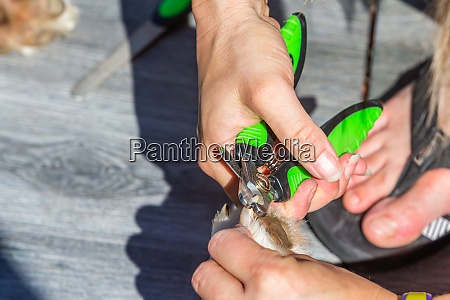 pliers clipping the claws of a