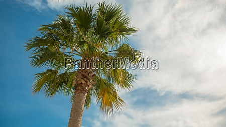 palm tree on vacation
