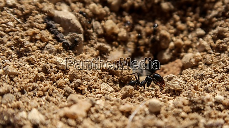 close up of ant in spain
