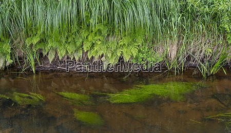 riparian vegetation closeup