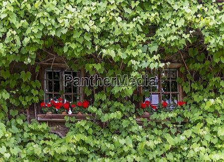 overgrown rustic windows